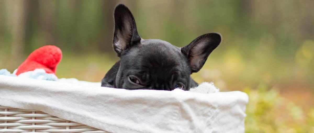 Hundekorb für Ihren Liebling!