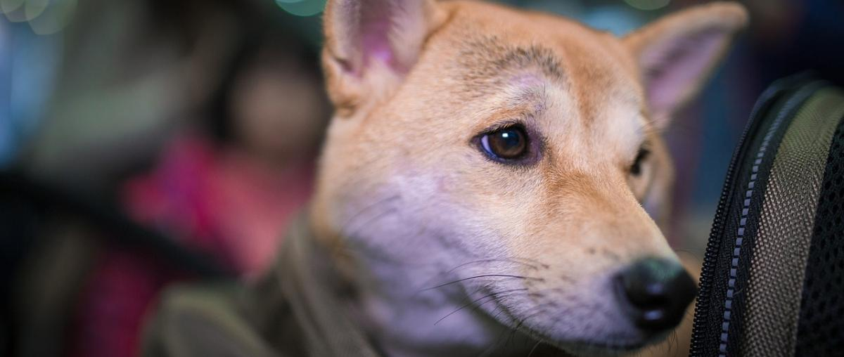Hunderucksack für den Hund