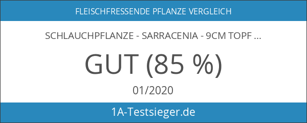Schlauchpflanze - Sarracenia - 9cm Topf